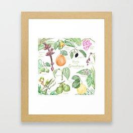 Wintertime Fruit in the Greenhouse Framed Art Print