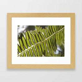 Pteridophyte Framed Art Print