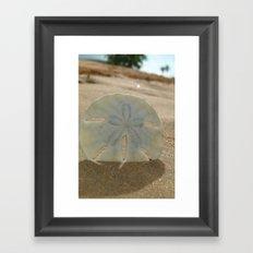 Sandy Dollar Framed Art Print