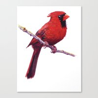 cardinal Canvas Prints featuring Cardinal by Ginger Opal