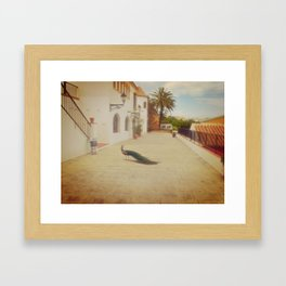 Italian Peafowl Framed Art Print