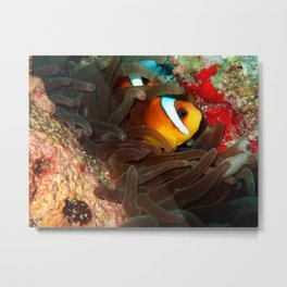 Clownfish in Hiding Metal Print