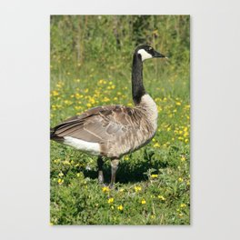 Canada Goose Among Flowers Canvas Print