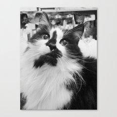 Blott - Kitty Cat I Canvas Print