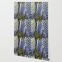 Longwood Gardens Orchid Extravaganza 53 Wallpaper