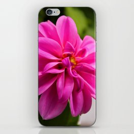 Spring Cheer iPhone Skin