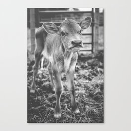 Pouty calf Canvas Print