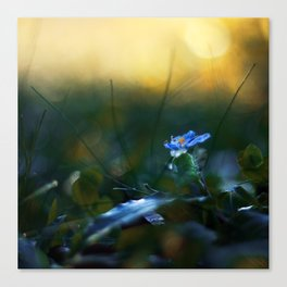 The Incendiary Forest Canvas Print