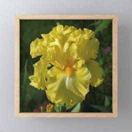 Golden Iris flower - 'Power of One' Framed Mini Art Print