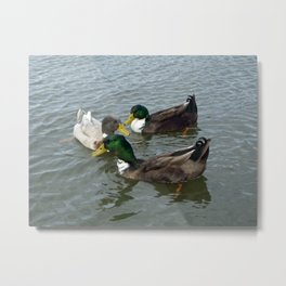 Three Floating Ducks Metal Print