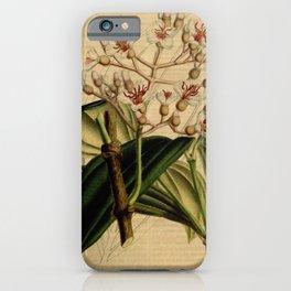 Flower medinilla sieboldtiana6 iPhone Case