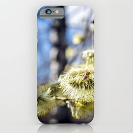 Willow Buds And Early Spring Bee iPhone Case