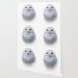 Dreamy Encounter with a Serene Snowy Owl Wallpaper