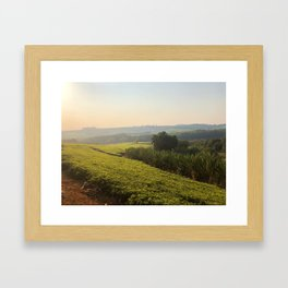 Malawi tea plantation Framed Art Print