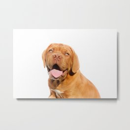 happy puppy dog Metal Print