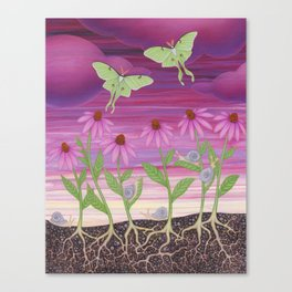 echinacea daydream with luna moths and snails Canvas Print