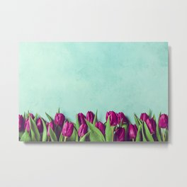 Purple tulips border, fresh spring flowers on rustic blue background with copy space Metal Print