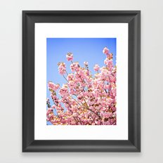 Pink Cherry Blossoms Against Blue Sky Framed Art Print