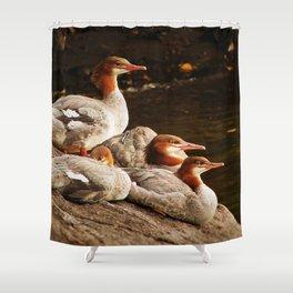 Common Merganser Family Shower Curtain