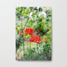 Charleston Hurricane Lily Metal Print