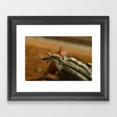 Fly Zone Framed Art Print