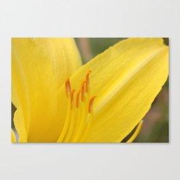 Yellow Daylily Macro Canvas Print