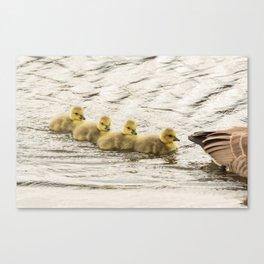 Wildlife family ducklings Canvas Print