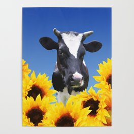 Cow black and white with sunflowers Poster