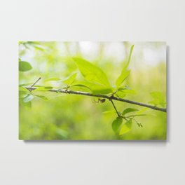 Twin Lakes Park - Spider Metal Print