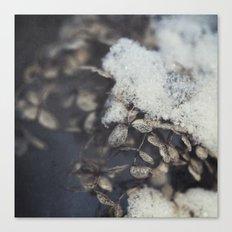 snow and hydrangea Canvas Print
