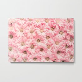Lovely Pink Daisies Metal Print