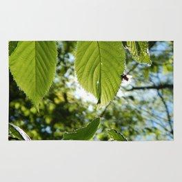 Sunlight Canopy III Rug