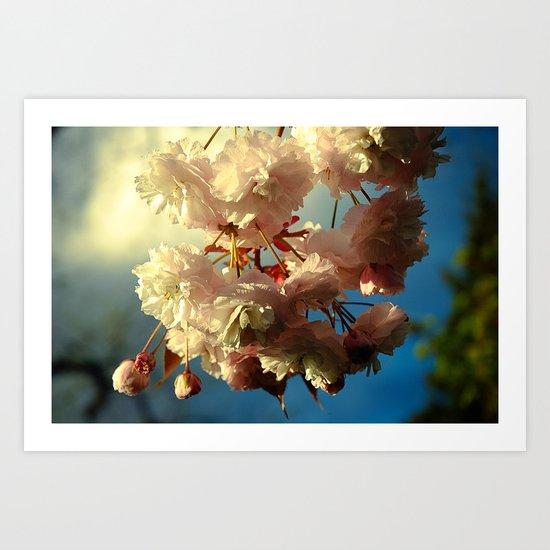 Cherry Blossoms in Hood River, Oregon Art Print