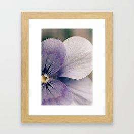 Blinking Violet Framed Art Print