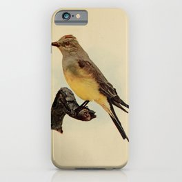 Vintage Print - Birds and Nature (1906) - Arkansas Kingbird iPhone Case
