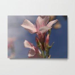 Oleander Metal Print