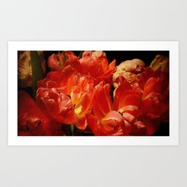Parrot Tulips bouquet Close up X Art Print