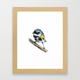 Bird on a Branch Framed Art Print