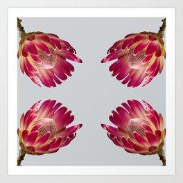 Tulip_Sugerbush_Pink Protea Art Print