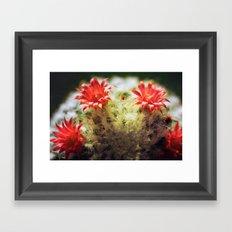 cactus flowers Framed Art Print