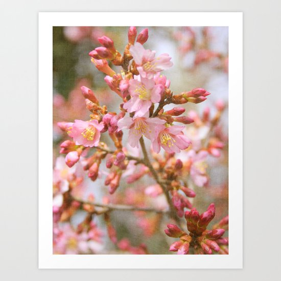 Blossom in the Spring time and fall in love Art Print