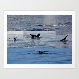Maui whales tales Art Print