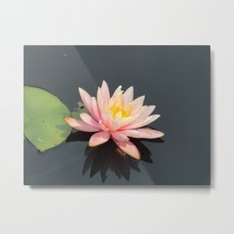 Water lillypads and lilly Metal Print