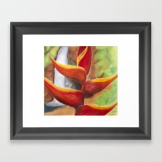 Heliconia Framed Art Print