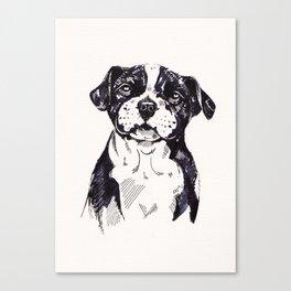 Staffy Pup Sketch Canvas Print