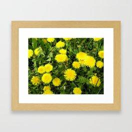 Dandelion Spring Framed Art Print
