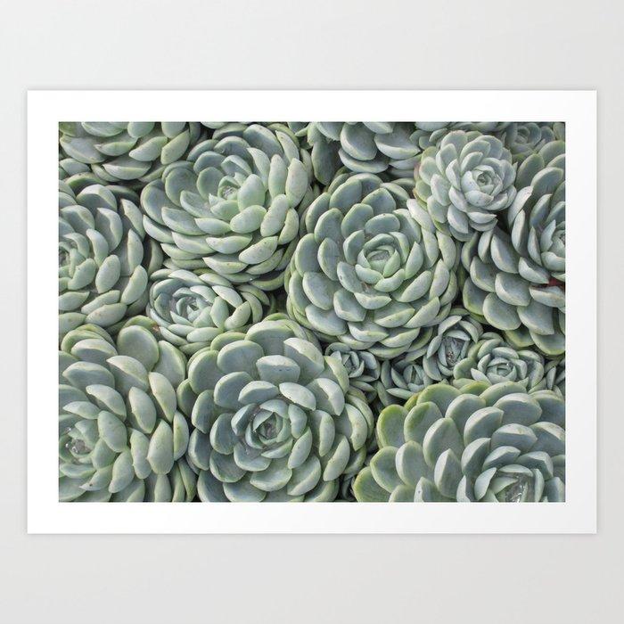 Pale Green Succulent Garden Kunstdrucke