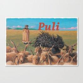 Puli Canvas Print