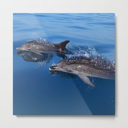 Mother and baby spotted dolphin Metal Print
