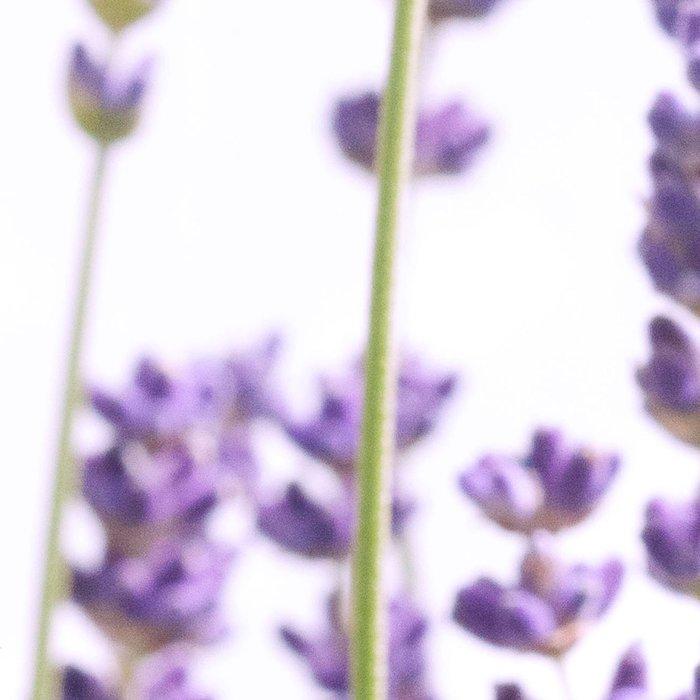 Purple Lavender #1 #decor #art #society6 Leggings